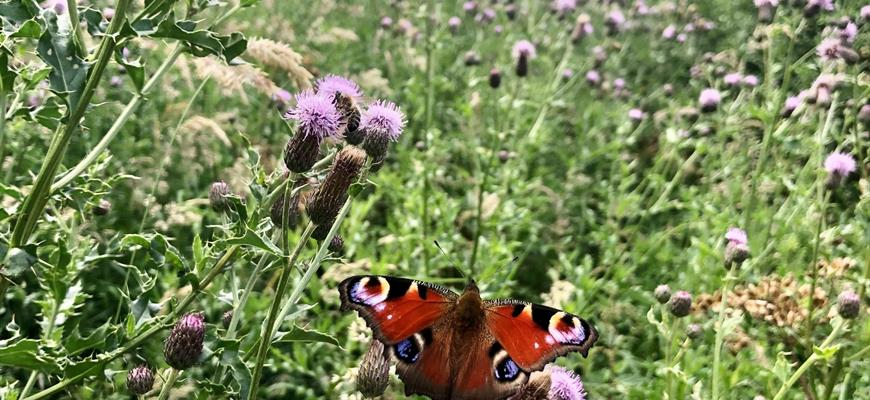 Nature has a home on new A43 road in Northamptonshire